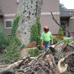 Thumbnail image for The Work Involved in Outdoor Tree Removal