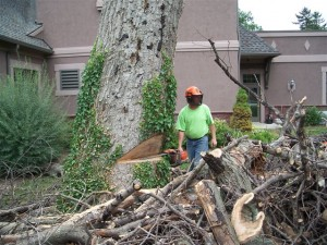 Outdoor Tree Removal