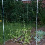 Thumbnail image for How To Grow Melon On Trellis Netting